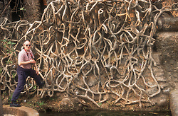 Man standing on artificial roots in rock garden at Chandigarh; Punjab; India,