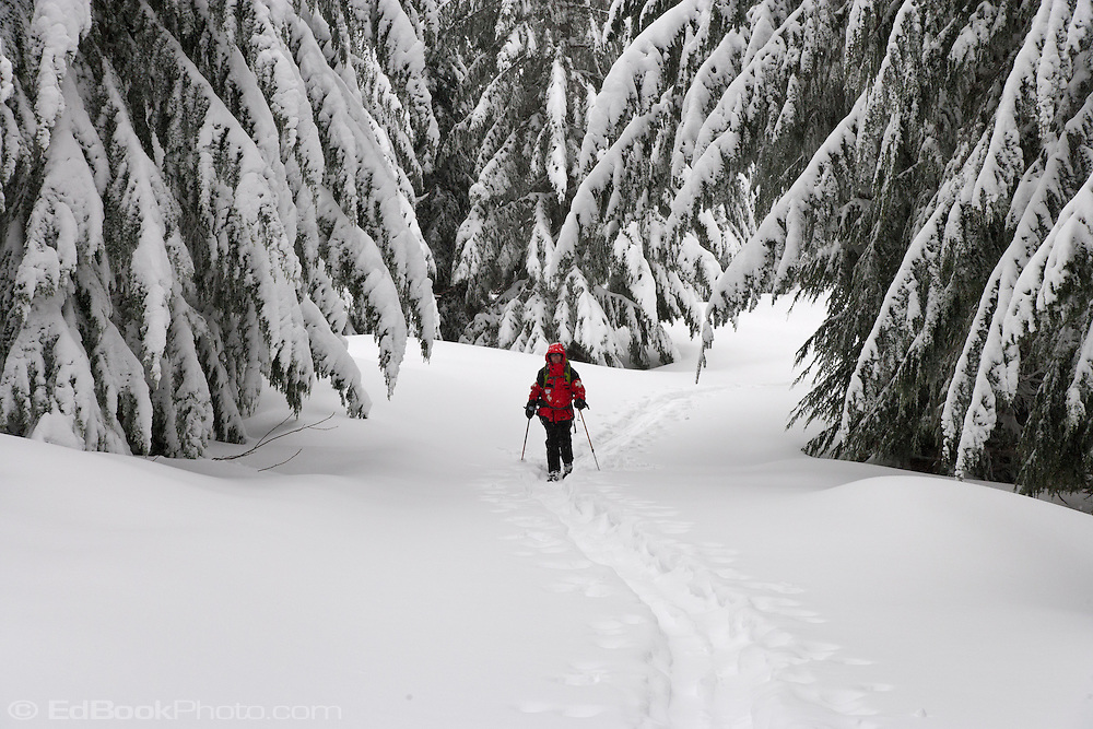 A lone ski patroller skis a grommed trail on the Mount Tahoma Trails near Mount Rainier in the Washington state Cascade Mountain Range.