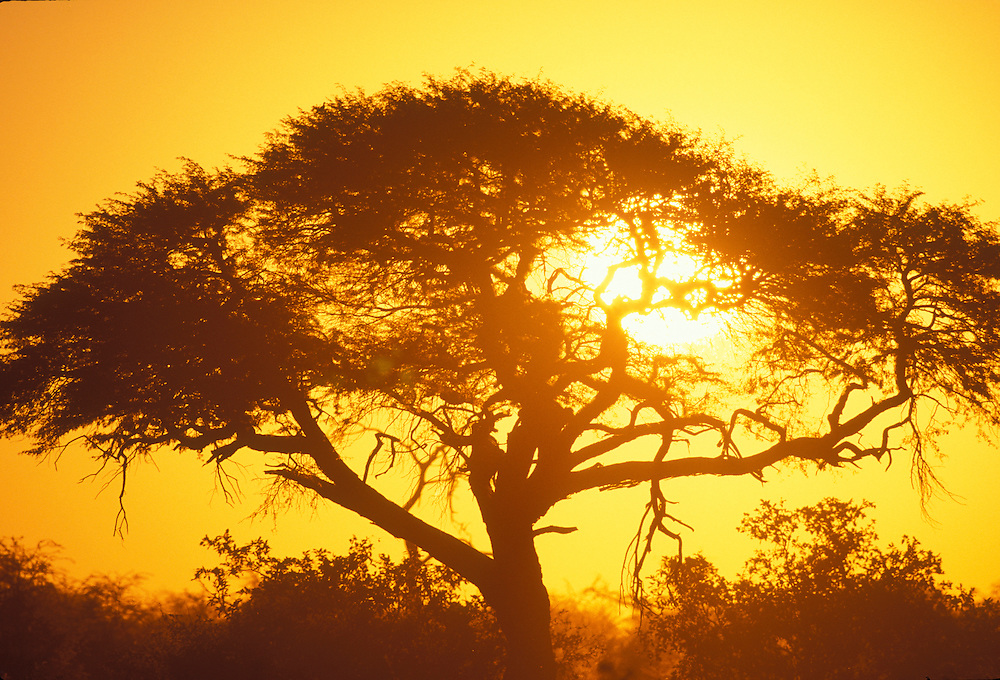 Africa, Botswana, Chobe National Park, Tropical sun sets behind trees in Savuti Marsh