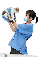 Female veterinarian holding up cat against white background