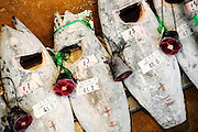 Frozen tuna is lined up for auction at Misaki Port fish market, west of Tokyo, Japan on Tuesday March 17 2009.