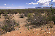 A trail paved by undocumented migrants that crossed from Mexico in to the United States on to the Tohono O'odham Nation in Arizona stretches across the Sonoran Desert, USA.