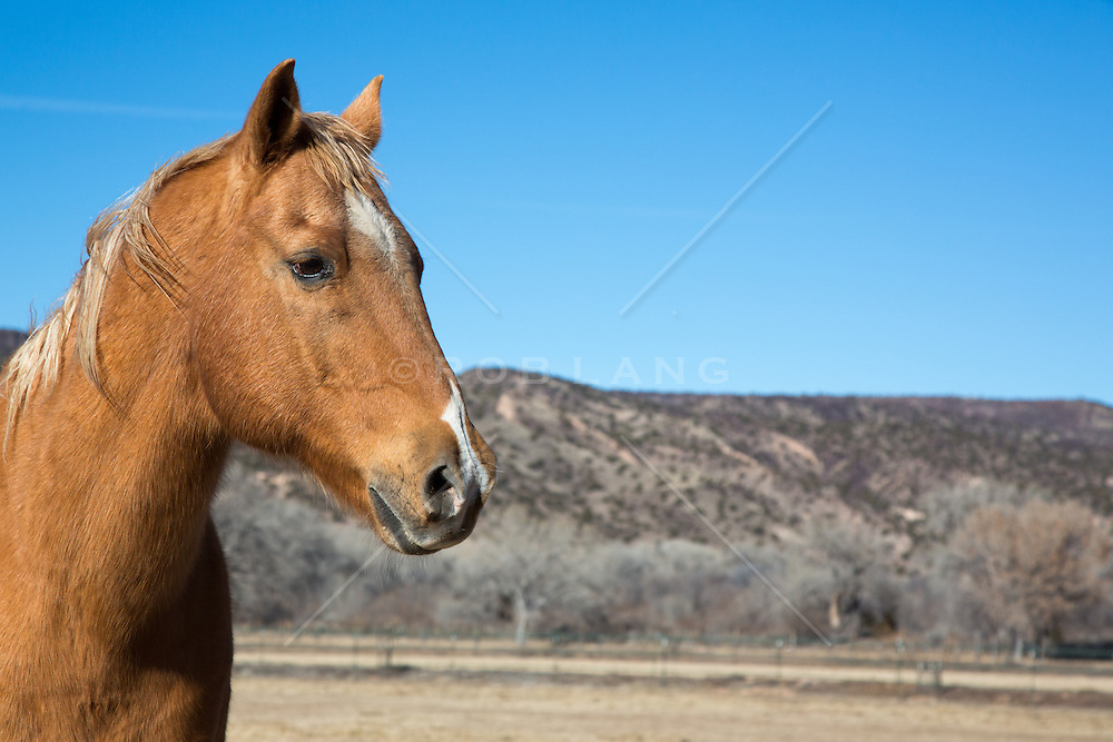 Beautiful horse on a ranch in New Mexico