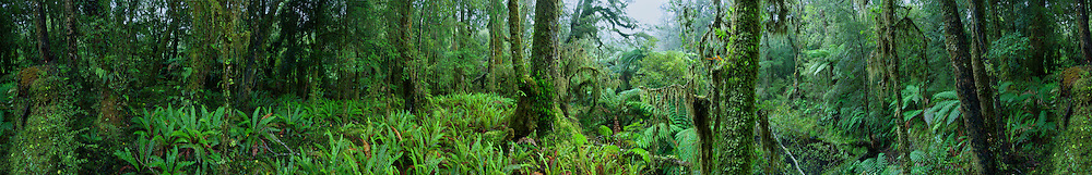 Dense rainforest on the West Coast of New Zealand