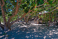A beach bure  at Mantaray resort, Nanuya Balavu island in the Yasawa group. Fiji.<br /> <br /> To see more on this location: http://www.stayinfiji.com/accommodation/gallery.htm