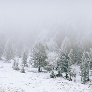 Trees in fog and winter mist in the snow near Jackson, Wyoming.