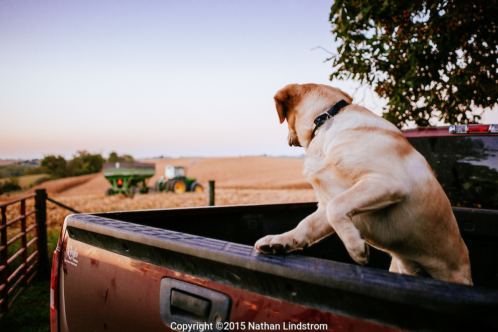 Dog glancing at tractor from truck bed on a farm in Iowa.