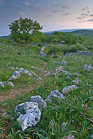 Apulia; cultivated landscape; Gargano National Park; Gargano Peninsula; Italy; Monte Sacro