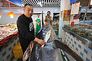 QINGDAO, CHINA - SEPTEMBER 12: (CHINA OUT) <br /> <br /> Fisherman Catches Over 300 Kilograms Swordfish<br /> <br /> Shi Donglei, owner of a wild seafood supermarket, compares a normal fish with a 310-kilogram weight swordfish on September 12, 2015 in Qingdao, Shandong Province of China. A fisherman caught a swordfish on Friday in Yellow Sea which weighted 310 kilograms and was in 4.1 meters long. The swordfish has carried to a seafood supermarket in Qingdao City.<br /> ©Exclusivepix Media