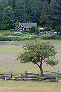 An apple tree from the old orchard (now mostly removed) and the William Norman Ruckle Farmhouse (built in the 1930s) which is now used as the park headquarters of Ruckle Provincial Park. Photographed in Ruckle Provincial Park on Saltspring Island, British Columbia, Canada.