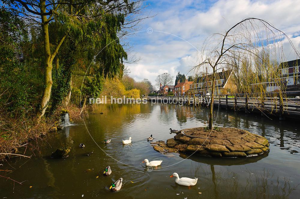 Village Pond, Walkington village East Yorkshire.