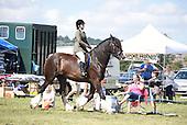 Class 16 - Ridden Heavy Horse