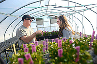 CALS Ag Institute students work in a greenhouse on campus. Photo by Marc Hall