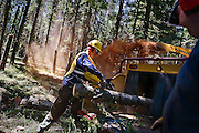 Jim Langdon of Coeur d'Alene tosses a stripped log into a wood chipper along Range Road in Farragut State Park on Saturday. The work being done along to the road will help to reduce forest fire risk in the area from excessive underbrush.