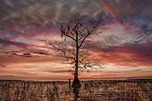 Florida Landscapes Part 1