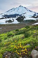 Mount Baker 10,781 ft (3,286 m), Mount Baker Wilderness Washington