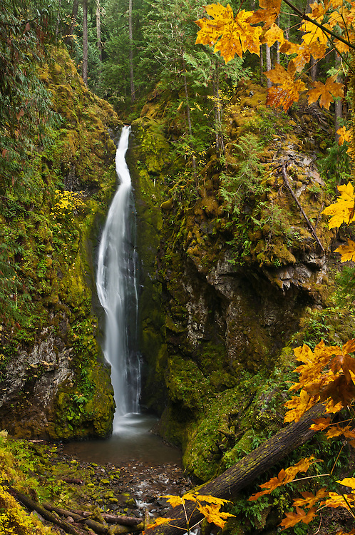 Pinard Falls; Umpqua National Forest, Cascade Mountains, Oregon