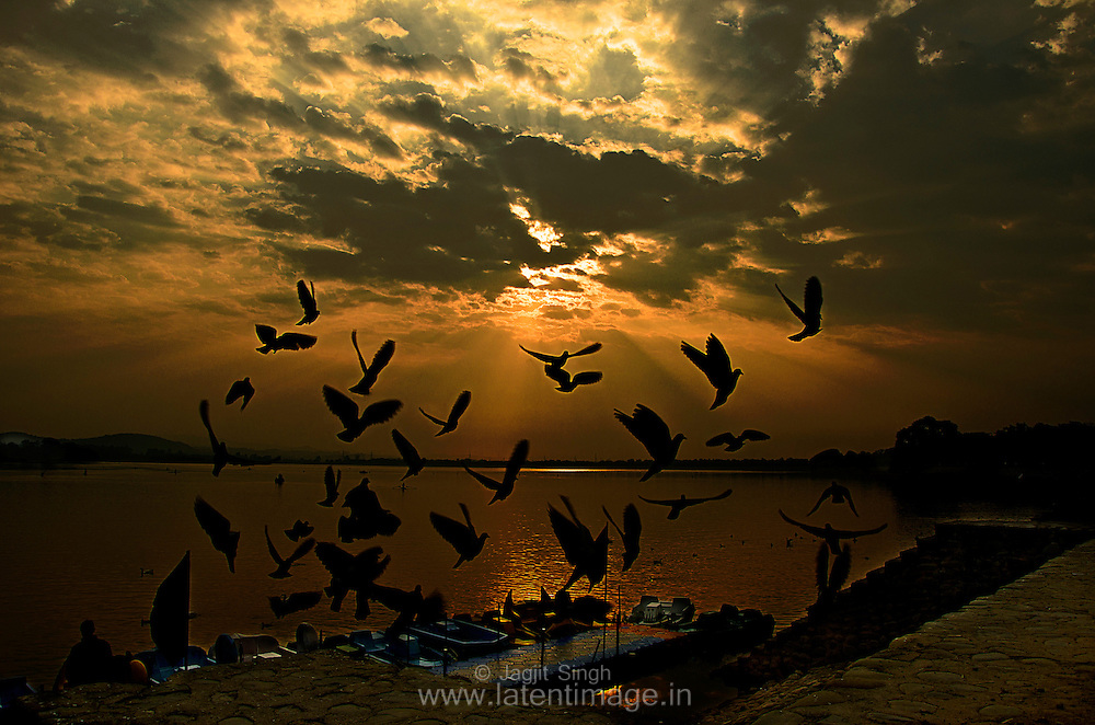 Birds are integral part of the Lake. Lovely sunrise at the backdrop. Sukhna Lake during sunrise.