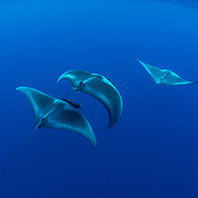 Devil and Manta Rays - Honda bay