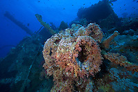 Soft Coral Encrusted Wreck Winch