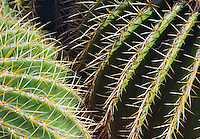 Closeup of a Barrel Cactus Phoenix Arizona USA&#xA;<br />