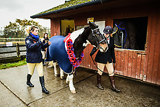 Plymouth - Memorial Service For Horses Killed In Conflict - 12 Nov 2016