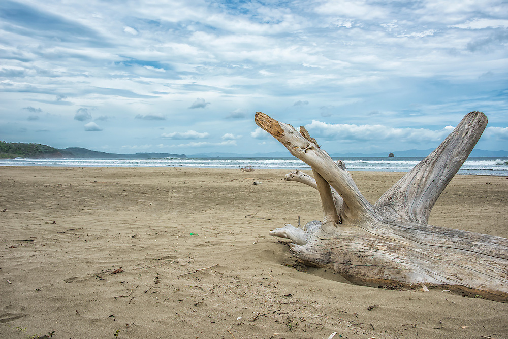 Beach Dead Wood 2 Playa Hermosa