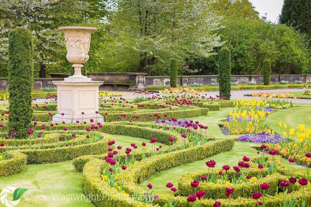 Trentham Gardens - Upper Flower Garden, Urn, Tulips and Blossom