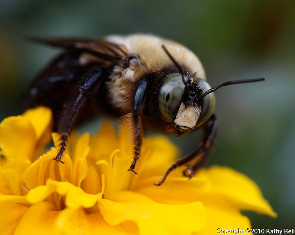 Image of a bumblebee on a flower