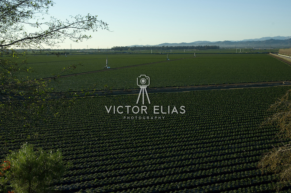 Agriculture lands near Camarillo, California. USA.