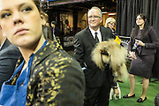 New York, NY - 16 February 2015. Pekingese Pequest General Tso under the arm of his handler before entering the ring for the toy dog group competition at the 139th Westminster Kennel Club Dog Show.