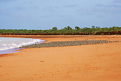 A flock of shorebirds settle close to the water at Crab Creek on the shores of Roebuck Bay.