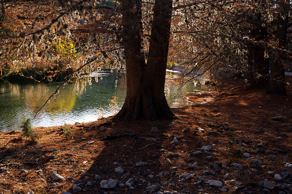 Stock photo of the evening shade of cypress trees along the Frio River bank in the Texas Hill Country