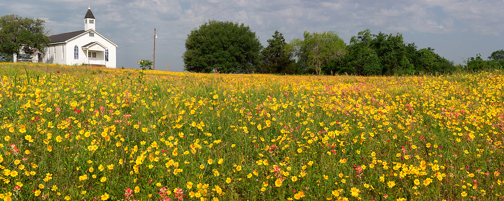 Coreopsis and Indian Paintbrush, Gonzales County, Texas