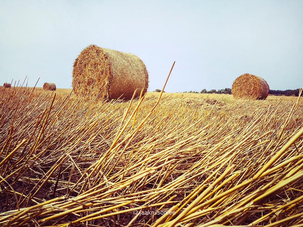 Straw bales in field, Estonia. Rural landscape, farmland.