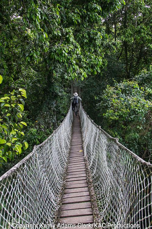 Tourists, Canopy Walk; Inkaterra Amazonia; Peru; Reserva Ecologica Inkaterra