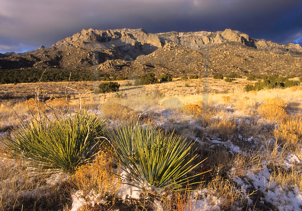 nature scenery and travel destinations: sandia mountain desert meadow landscape with yucca bushes and some snow at sunset, sandia mountains, albuquerque, new mexico, horizontal