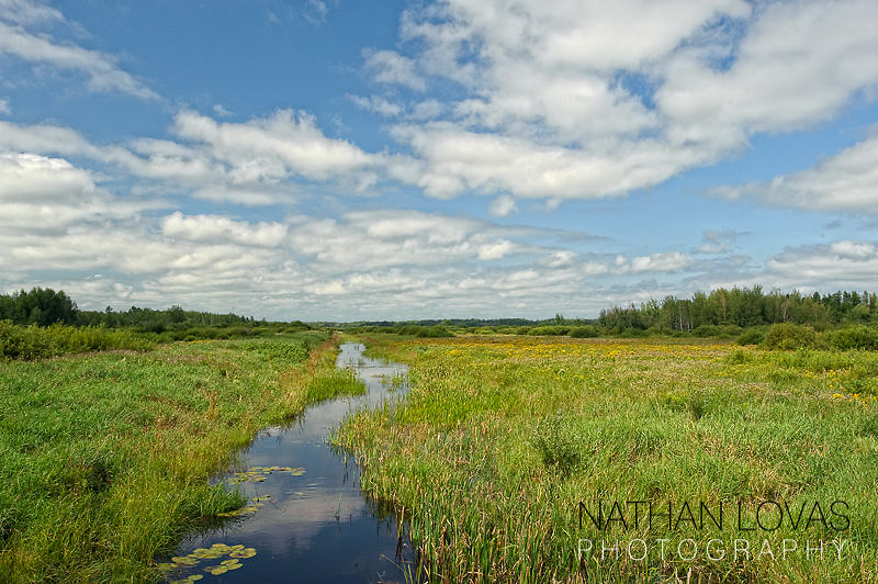 River flowing through grass; Minnesota.
