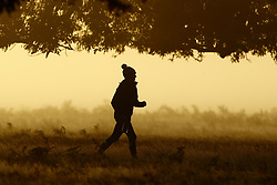 © Licensed to London News Pictures. 09/11/2019. London, UK. A jogger runs through Bushy Park on a cold frosty morning in south west London. A cold spell is begining to hits parts of the United Kingdom. Photo credit: Peter Macdiarmid/LNP