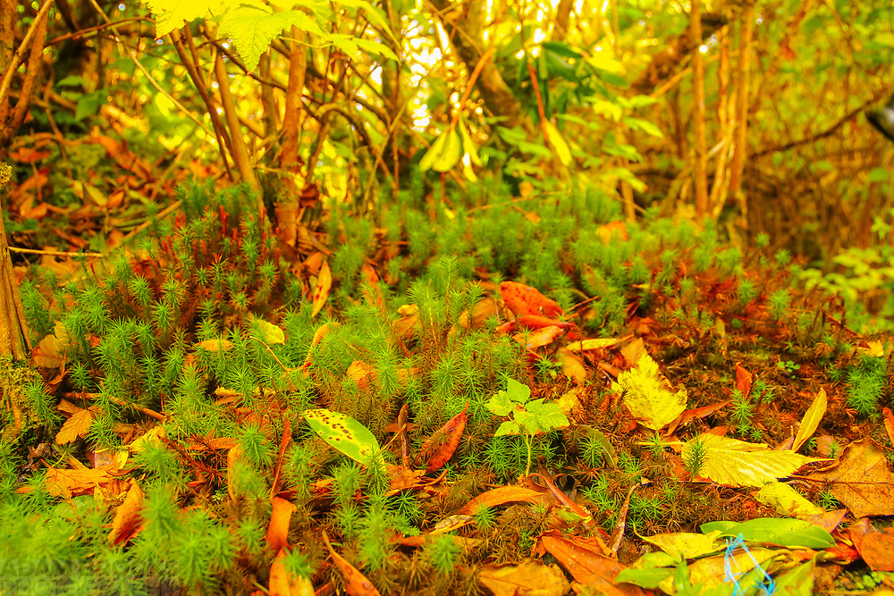 Some lovely close up work of some small plants which looked to me like a Far-Away forest flanked by normal sized leaves to put it back into perspective to give a somewhat surreal effect along with some brilliant colours. Taken near Gorlan Lough.