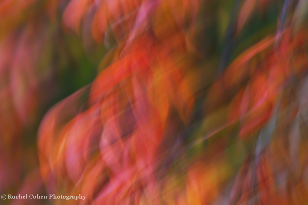 &quot;Emotion in Color&quot;<br /> <br /> Flowing abstract artwork in a rainbow of colors!
