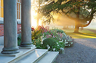Porch with colonnade, sunrise, mist, box ball, Lilium 'Black Beauty', Agapanthus campanulatus