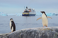 Chinstrap and Adelie penguins in front of the National Geographic Orion on Booth Island in the Wilhelm Archipelago of Antarctica.