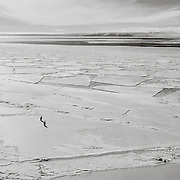 Two Emperor Penguins on McMurdo Sound