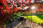 Sunlight through autumn grape vines, Korana Village, Plitvice Lakes National Park, Croatia