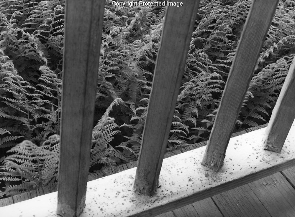 Ferns, Frost Farm, 1988
