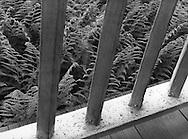 Ferns, Frost Farm, 1988