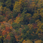 Leaves changing colors as the Autumn season arrives to the cliffs of the New Jersey Palisades