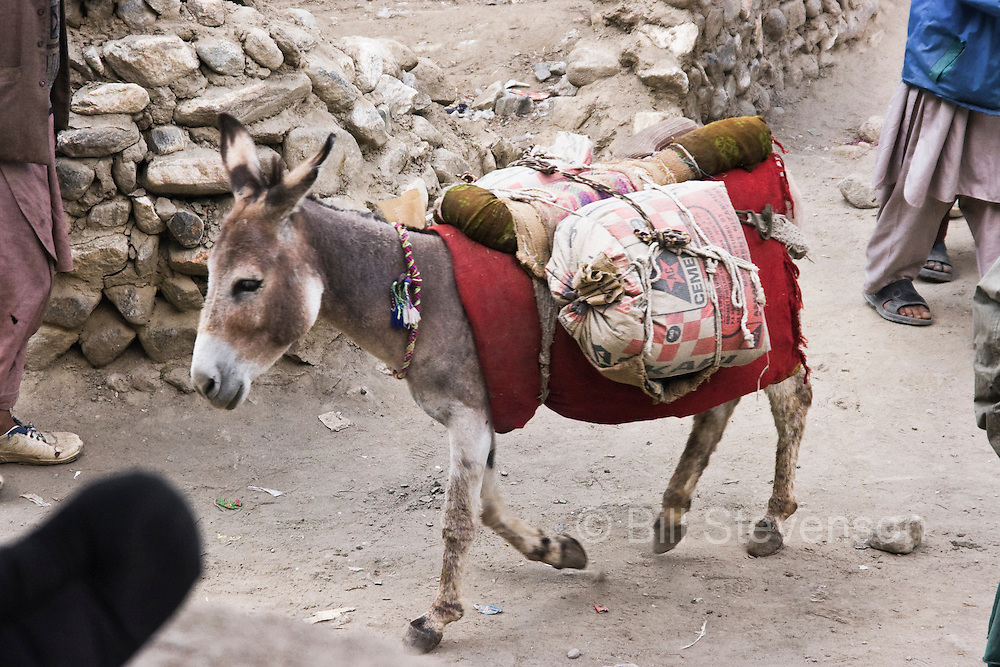 A small donkey pack animal carrying a load through the village of Askole in Baltistan province of Pakistan