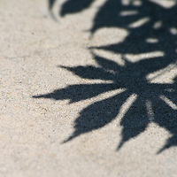 A close-up of the shadows of Japanese maple leaves (Acer palmatum) on a concrete bench, Vienna Town Green, Vienna, Virginia.